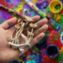 Can Magic Mushrooms Improve Creativity?