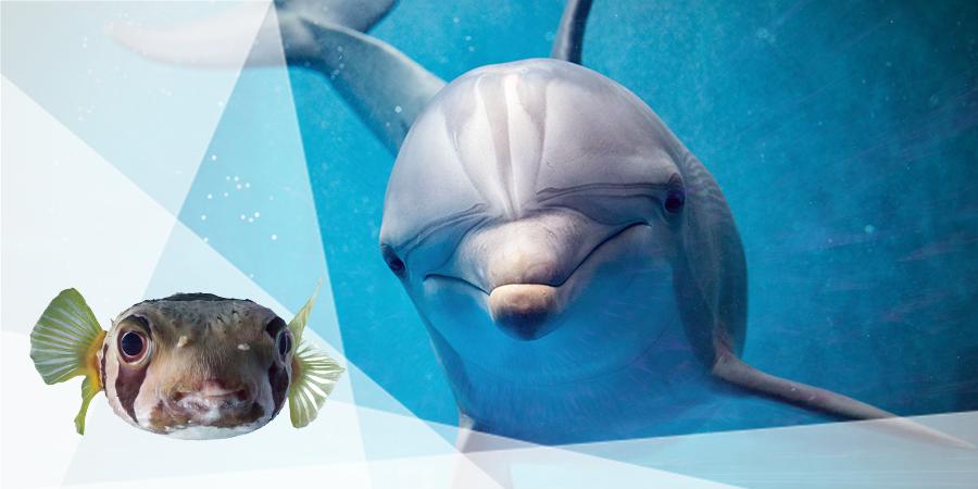 Delphine Werden Breit Von Kugelfischgift