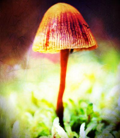 25 Most Common Psilocybin Containing Mushrooms In The Wild - MushMagic