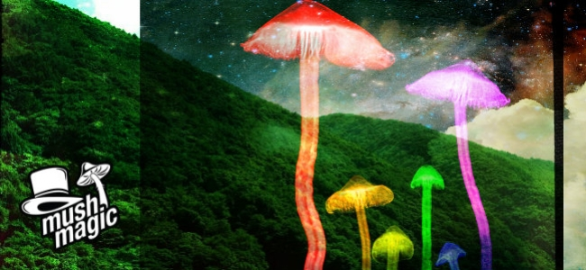 A Guide To Growing Magic Mushrooms Outdoors