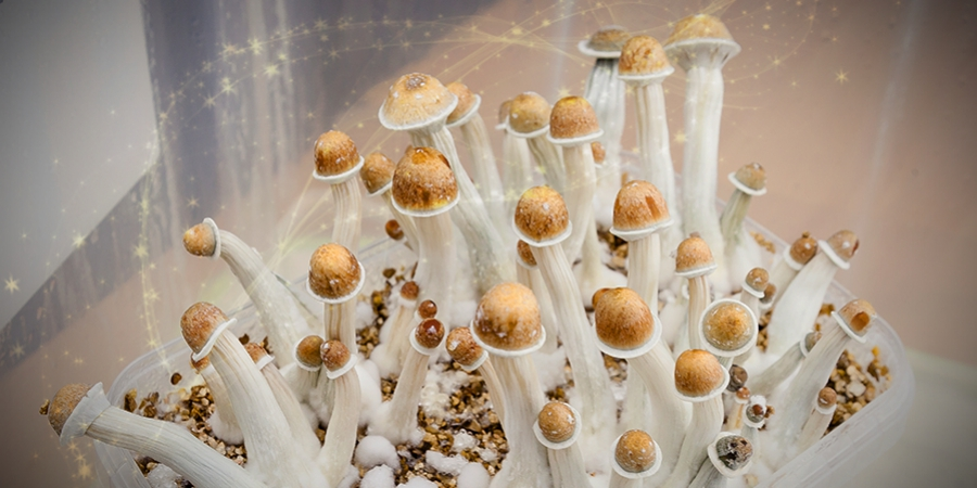 Can You Use Magic Mushrooms To Improve Productivity?