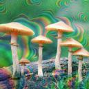 Tolerance And Magic Mushrooms: Everything You Need To Know