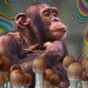 What Is The Stoned Ape Theory And Why Does It Matter?