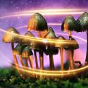 How Magic Mushrooms First Got Their Magic