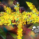 New Species Of Psychedelic Lichen Discovered