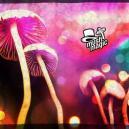 Drying Magic Mushrooms And Truffles: How To