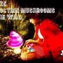 25 Most Common Psilocybin Containing Mushrooms In The Wild